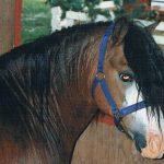 donsi1994 001