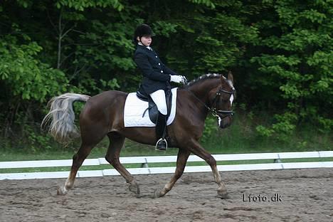 stort gående pony